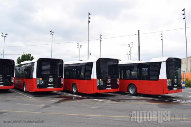 Da li Beograd ima tačno propisanu kolor šemu autobusa? © Stefan Nikolić