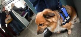 BG: Visoki psi i mačke ne mogu u autobus