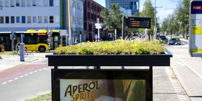 Autobuska stajališta sa zelenim krovom za pčele u Utrehtu